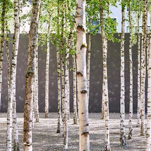 birch grove in hotel courtyard